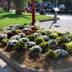 Κήπος στο πάρκο της Καραολή & Δημητρίου